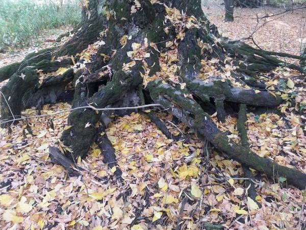 winter_root